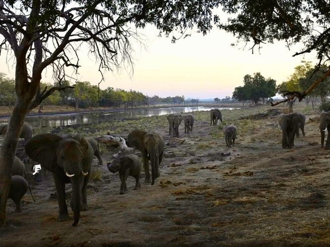 A troop of elephants in Limpopo River Valley
