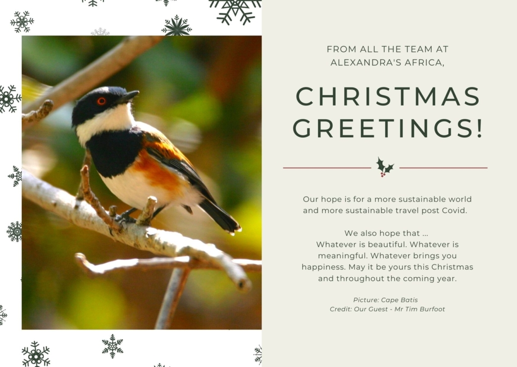 Christmas Card with photograph of a Cape Batis