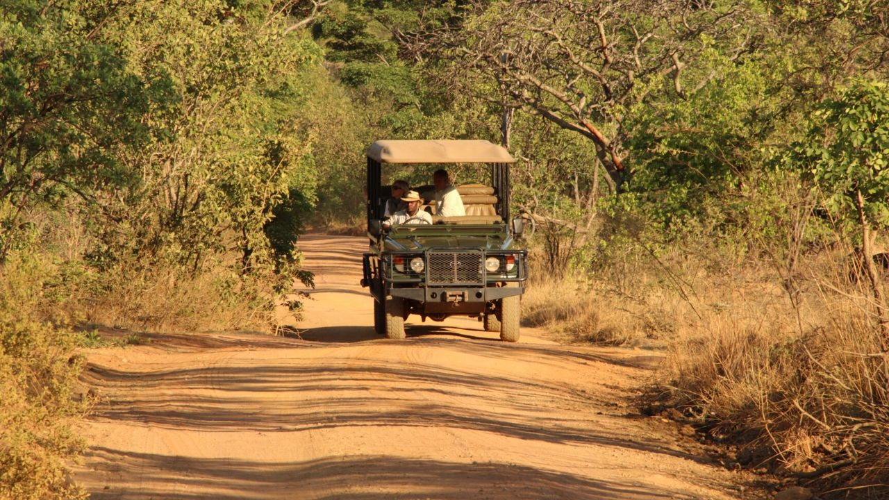 Game drive vehicle in Africa on Safari with 2 people on board heading towards the camera thick bush either side with 2 cheetahs (brothers) in the foreground