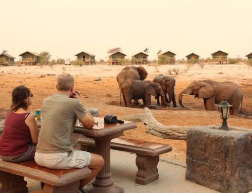 10 Great Reasons to splurge on a Safari Holiday!
