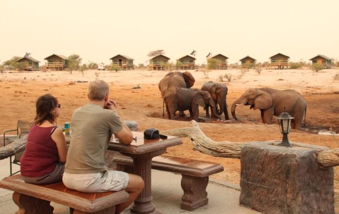 Tourists enjoying watching elephants interact at a waterhole
