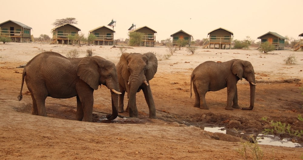 Elephants at water hole with tourist tented accommodation in background