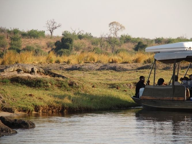 Enjoying a crocdile sighting on Chobe River Cruise