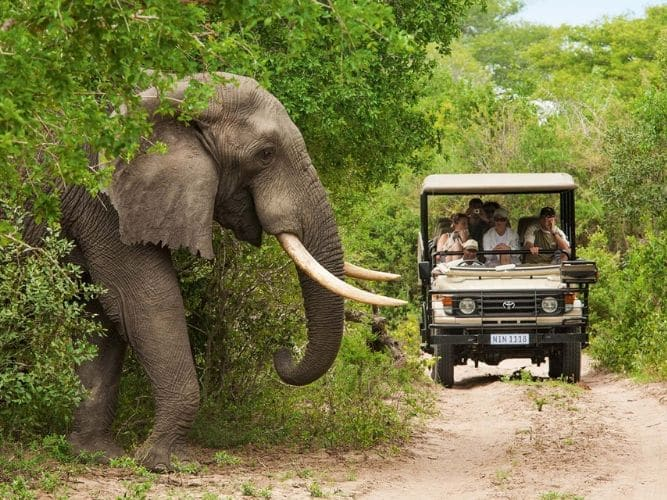 Game Drive in Addo Elephant National Park