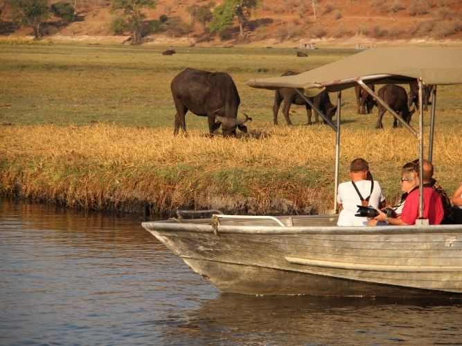 Game Viewing on Chobe Cruise