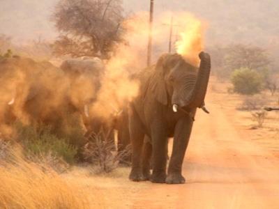 Elephant flicking up dust
