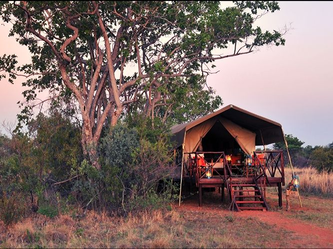 Picture of luxury tent from outside - with lamps on the decking, with big tree behind