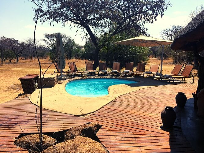View of the Swimming Pool surrounded by Sun Loungers under large umbrella with Venda pots in foreground - 1st camp on the Alexandra's Africa Classic Safari