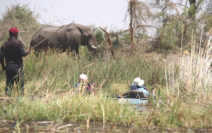 Two guests enjoying a Mokoro ride in the Okavango Swamps - Elephant feeding in the background