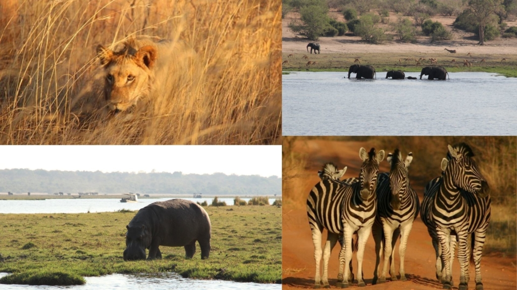 A mosaic of pictures of wildlife sighted on an Alexandra's Africa
