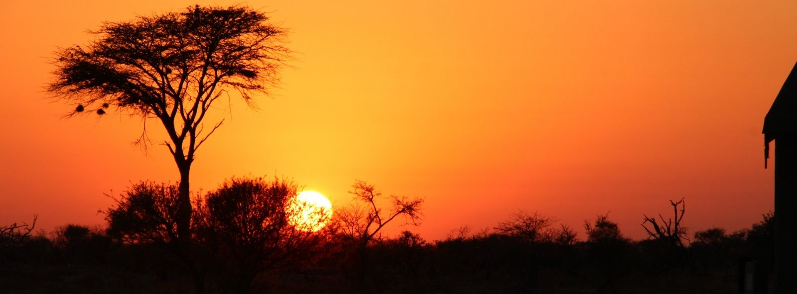 Sunset in Chobe - photograph of Acacia Tree filled with bird nest silhouetted against the setting sun behind - vast orange skies serve as background