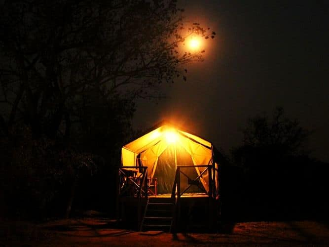 Moon shining through the branches of a tree with an Alexandra's Africa luxury tent illuminated with an oil lamp in the foreground - one of our BushCamps on the Alexandra's Africa Classic Safari