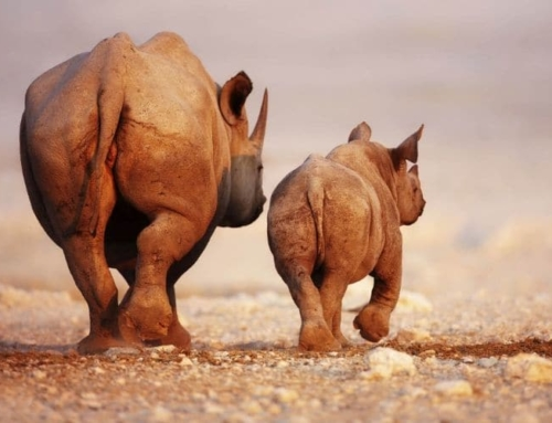It's official wildlife is worth far more alive than dead!