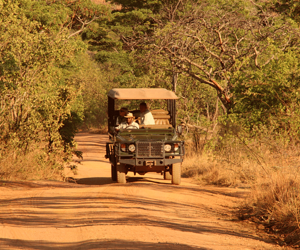 Image of open safari game drive vehicle on dust road in South Africa driving towards the camera. Think bush on either side. Drivers and 2 guests are seated in the vehicle.
