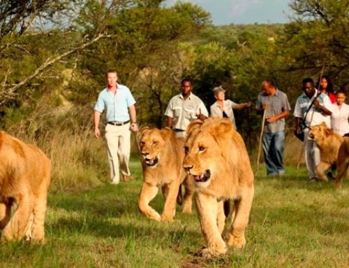 True Wildlife Conservation Is What We're About!